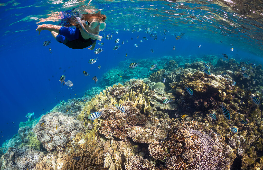 snorkeler with tropical fish