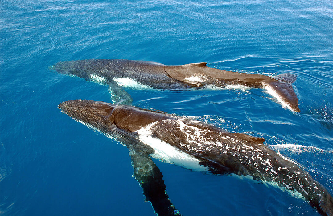 whales swimming by