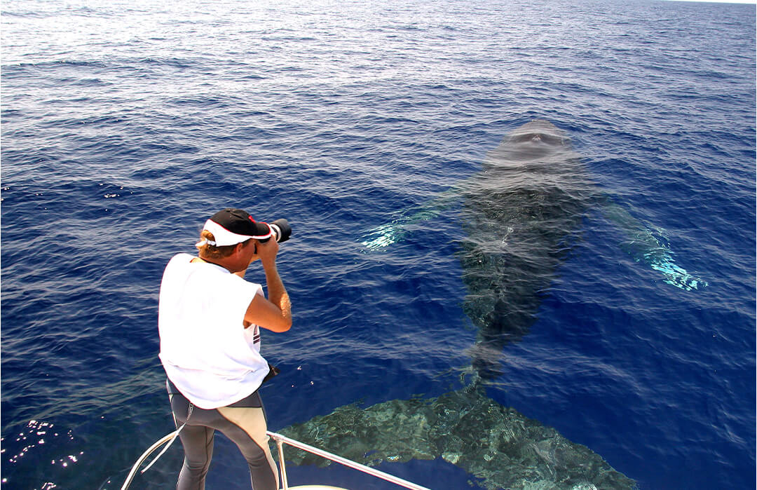 man taking photos of a whale